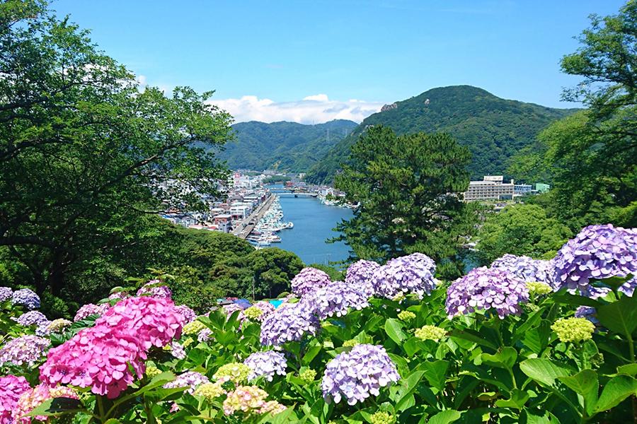 アジサイの花と港