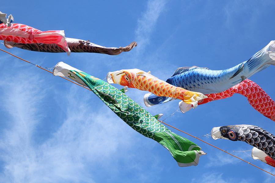 青空を泳ぐ鯉のぼりたち
